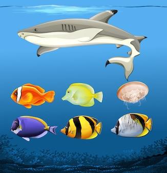 Set of underwater fish