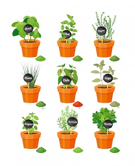 Set of useful herbs in brown pots with name labels on wooden stick and finished powder spice vector illustration isolated