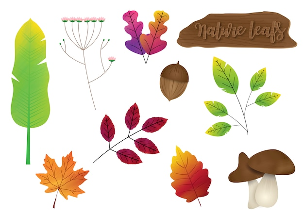 Set of variety nature leafs with wooden sign isolate