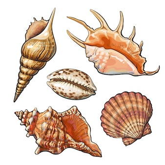 Set of various beautiful mollusk sea shells, sketch style illustration isolated. realistic hand drawing of seashells like conch, kauri, oyster, spiral, clam and mollusk shells