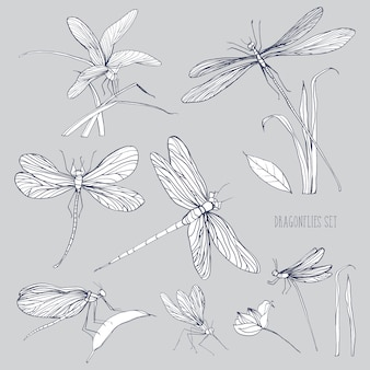 Set of various dragonflies in different poses. monochrome hand drawn collection flying adder.  illustration.