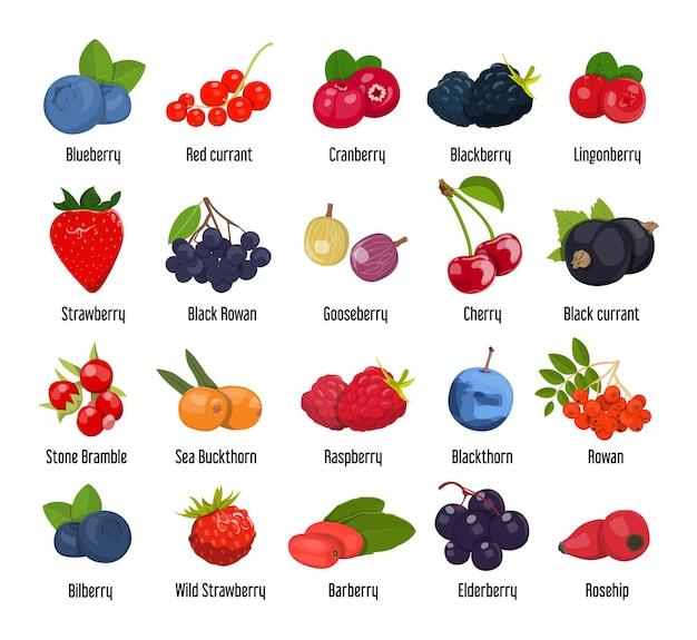 Set of various edible berries.