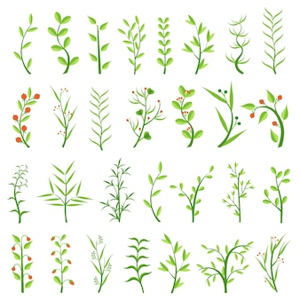 Set of various herbs. healing herbs. shrubs with berries. weeds. algae. climbing plants. isolated
