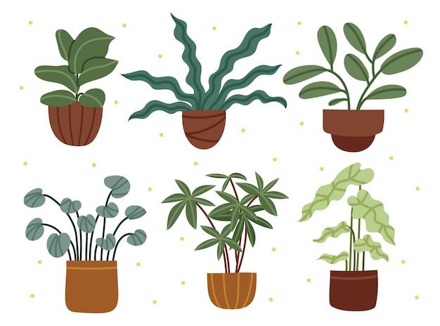 Set of various houseplants home decor cozy plants clay pots