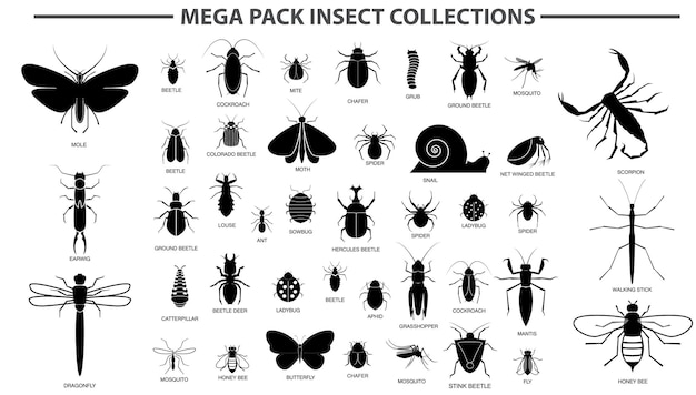 Set of various insect in silhouette with insect name eps vector