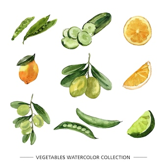 Set of various isolated vegetable watercolor