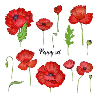 Set of various poppy. red flower collection. colorful hand drawn illustration.
