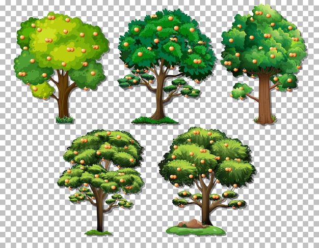 Set of various trees on transparent background
