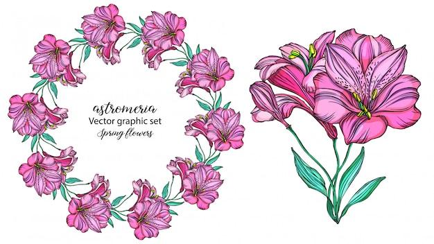 Set of vector alstroemeria flowers