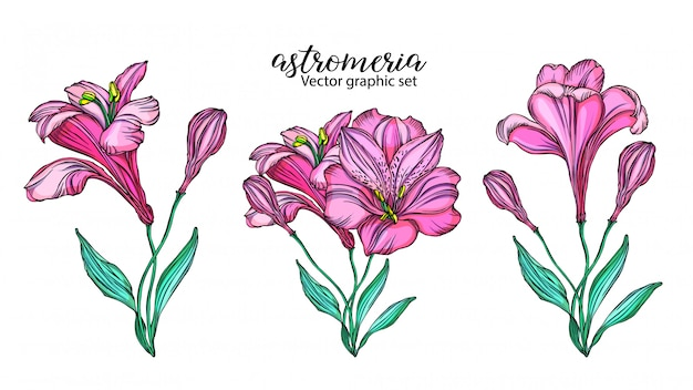 Set of vector alstroemeria flowers