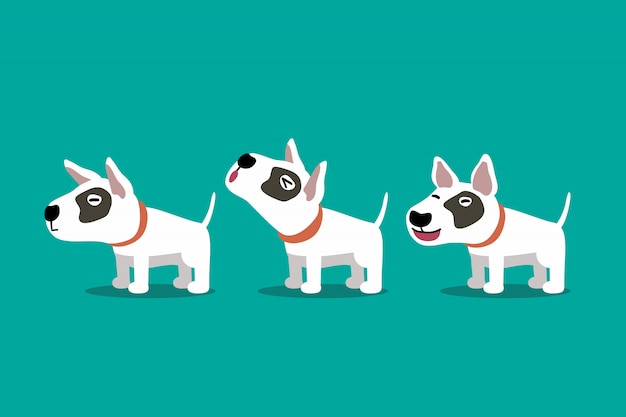 Set of vector cartoon character bull terrier dog poses