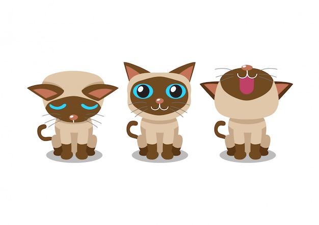Set of vector cartoon character siamese cat poses