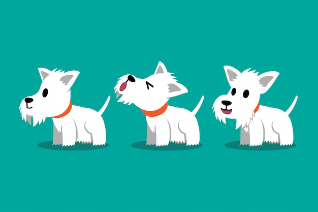 Set of vector cartoon character white scottish terrier dog poses