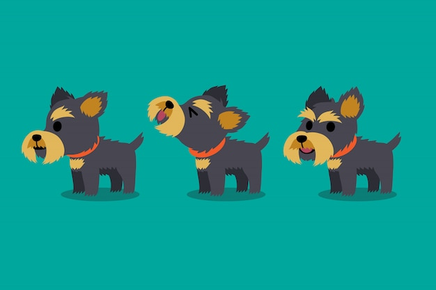 Set of vector cartoon character yorkshire terrier dog poses