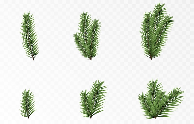 Set of vector fir branches spruce branches png pine spruce christmas decorations