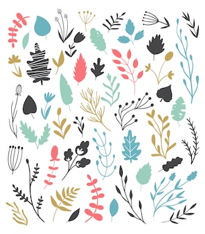 Set of vector floral elements. different plant species