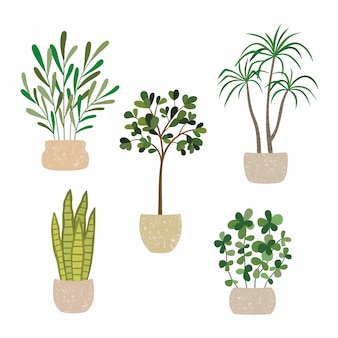Set of vector house indoor plants, potted plants collection