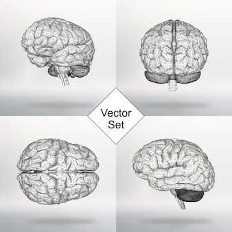 벡터 일러스트 레이 션 인간의 두뇌를 설정 합니다. 폴리곤의 구조적 그리드. 추상 크리에이 티브 개념 벡터 배경입니다. 분자 격자. 다각형 디자인 스타일 레터헤드 및 브로셔.