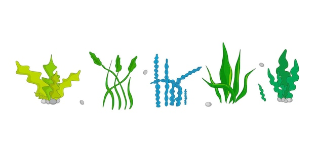 A set of vector illustrations of algae in a cartoon style
