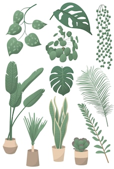 Set of vector illustrations of home plants: monstera leaf