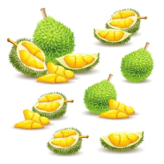 Set of vector illustrations, icons of a durian fruit