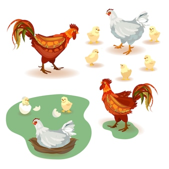 Set of vector images rooster, chicken and many small yellow chickens