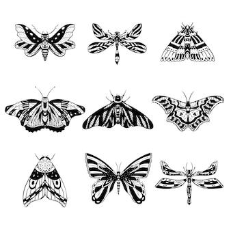 Set of vector night butterflies moths hand drawn illustration