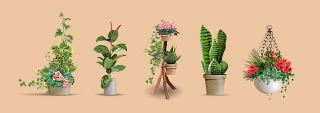 Set of vector realistic detailed house or office plant for interior design and decoratione.