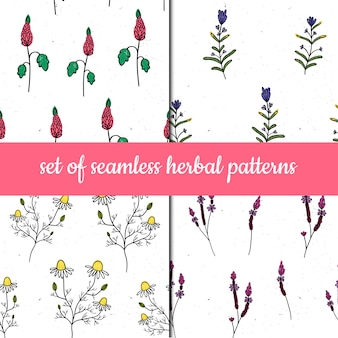 Set of vector seamless patterns. herbs and plants.