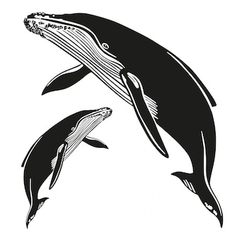Set of vector whales