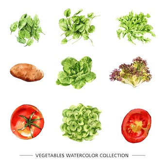 Set of vegetable collection isolated watercolor