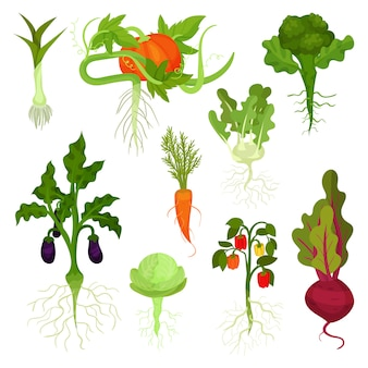 Set of vegetables with roots. healthy nutrition. natural food. fresh garden products. edible plants