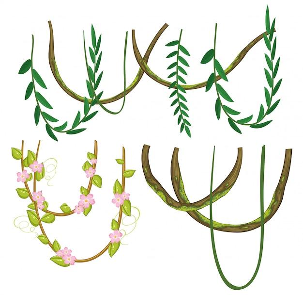 A set of vine on white background