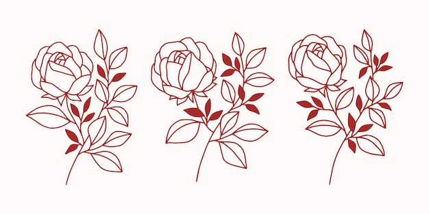 Set of vintage botanical rose flower and leaf elements for beauty brand or logo