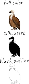 Set of vulture in color, silhouette and black outline on white background