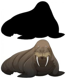 Set of walrus silhouette