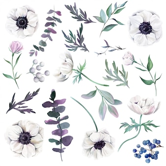 Set of watercolor anemones with leaves berries