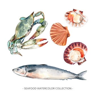 Set of watercolor blue crab, shell, mackerel illustration for decorative use.