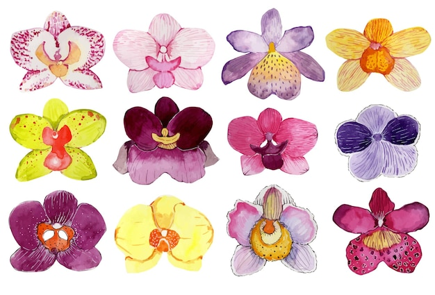 Set of watercolor buds of multicolored orchids