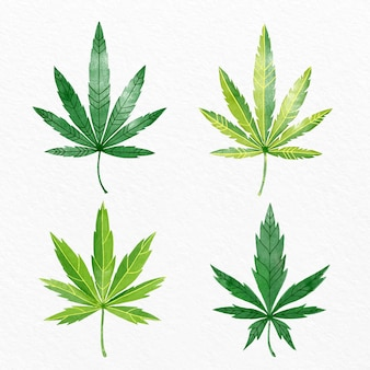 Set of watercolor cannabis leaves