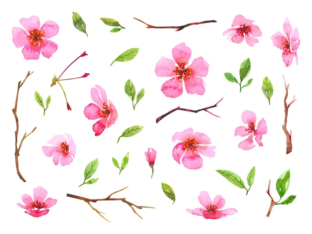 Set of watercolor cherry blossom flowers. sakura beautiful spring floral collection. colorful illustration isolated on white background.