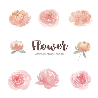 Set of watercolor climbing rose and peony, illustration of elements isolated white.
