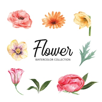 Set of watercolor colorful flower and foliage, illustration of elements isolated