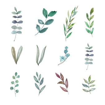Set of watercolor foliage, hand-drawn illustration of elements isolated