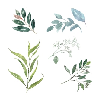 Set of watercolor foliage, illustration of elements isolated white.