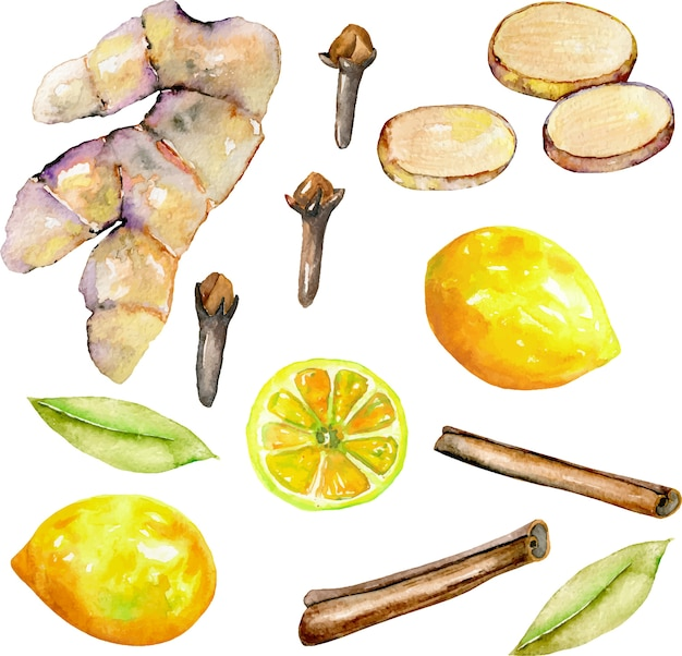 Set of watercolor ginger, lemon and spices elements