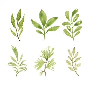 Set of watercolor hand painted greenery element