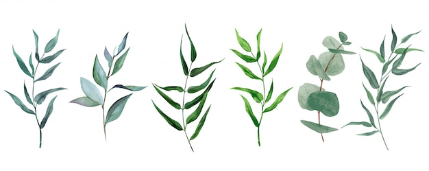 Set of watercolor leaves and branches, hand drawn greenery collection