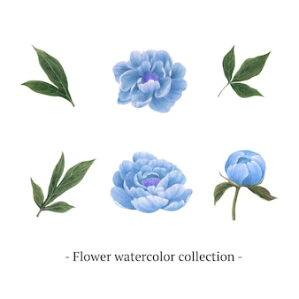 Set of watercolor peony, hand-drawn illustration of elements isolated white.