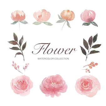 Set of watercolor peony, rose, flower bud, illustration of elements isolated white.